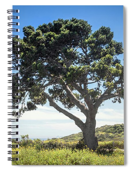 Big Tree Spiral Notebook by Alison Frank