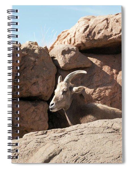 Bighorn Sheep Spiral Notebook