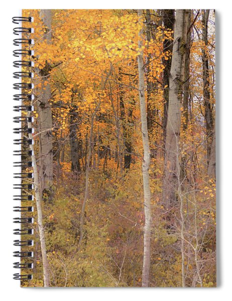 Spiral Notebook featuring the photograph Birches In Autumn by Rod Best