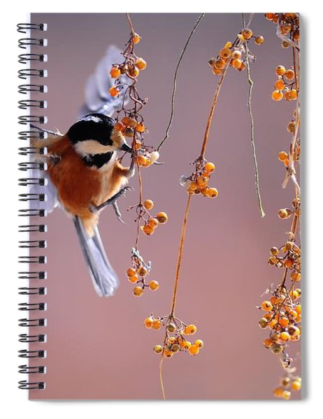 Bird Eating On The Fly Spiral Notebook