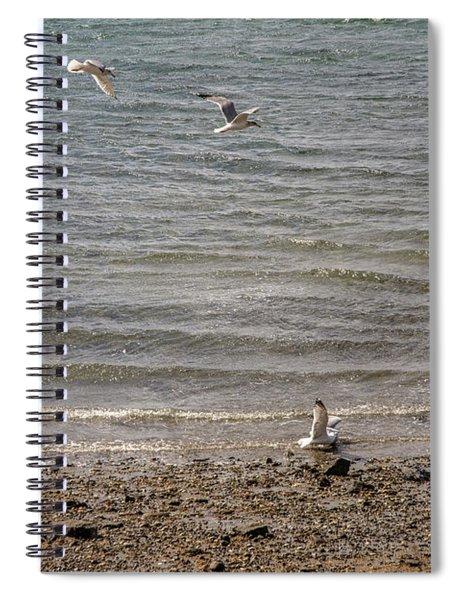 Bird Landing Spiral Notebook