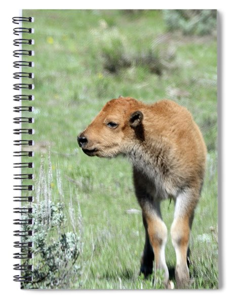 Bison Calf In Lamar Valley Spiral Notebook