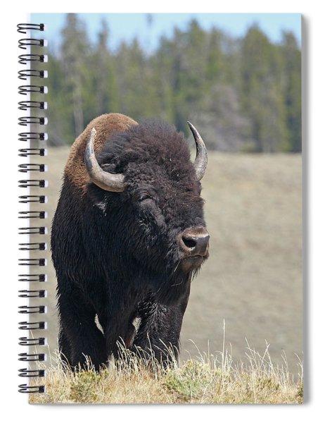 Bison In Hayden Valley Spiral Notebook