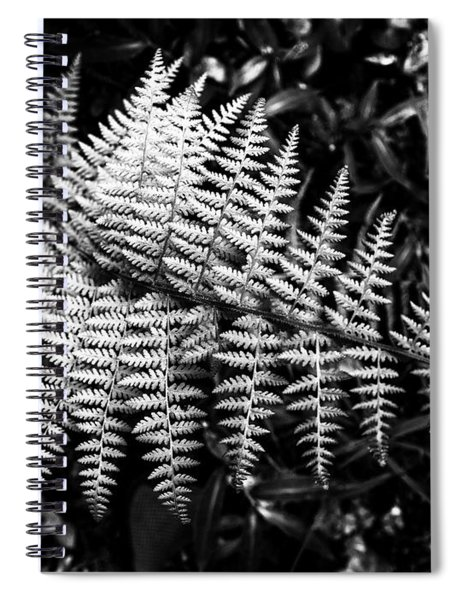 Black And White Fern Spiral Notebook by Louis Dallara
