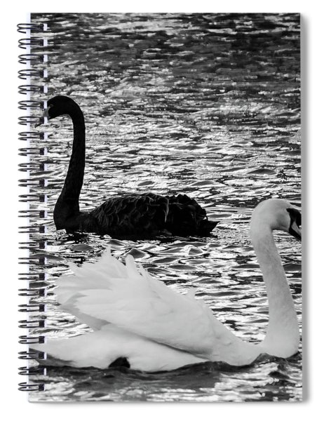 Black And White Swans Spiral Notebook