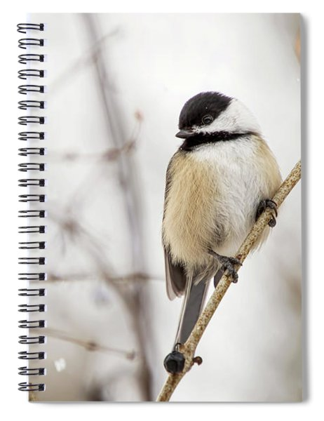 Black Capped Chickadee In Falling Snow Spiral Notebook