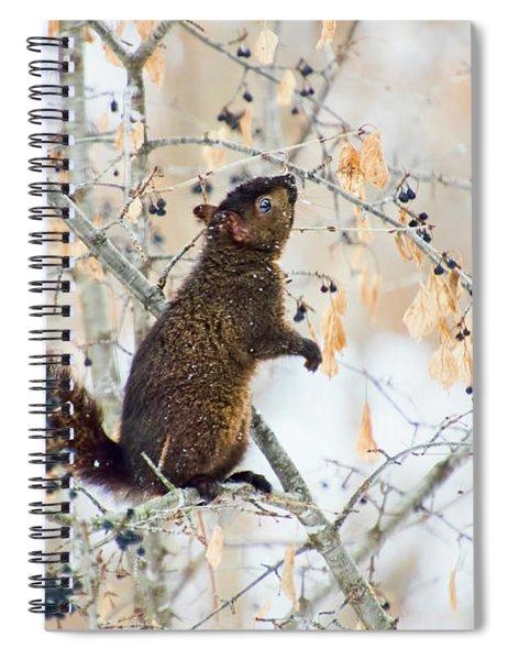 Black Squirrel Eating Berries In Winter Spiral Notebook