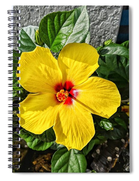 Bloom And Shine Spiral Notebook