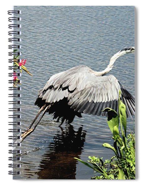 Blue Heron Take Off Spiral Notebook