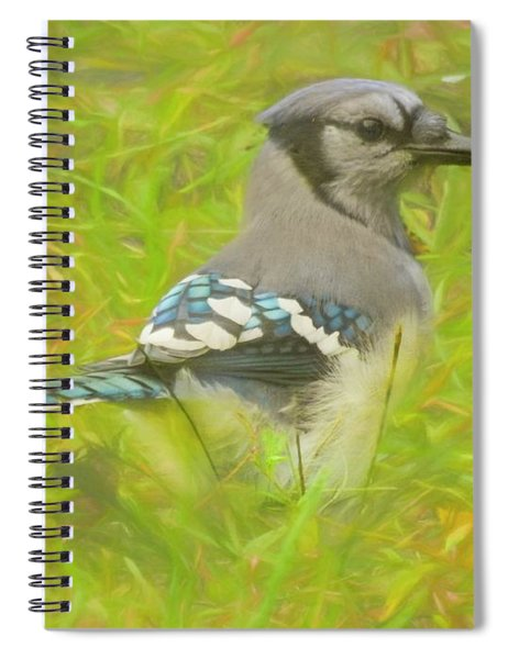 Blue Jay On The Ground. Spiral Notebook