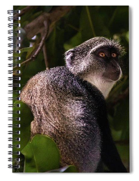 Blue Monkey, Zanzibar Spiral Notebook