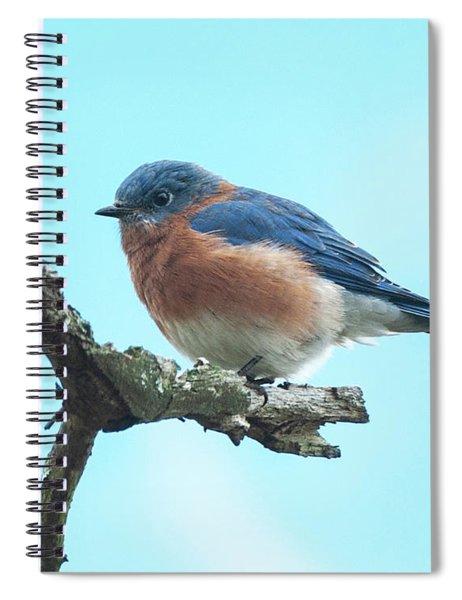 Blue On Blue Eastern Bluebird Spiral Notebook