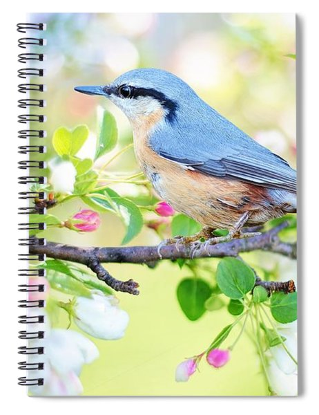 Blue Orange Bird Spiral Notebook
