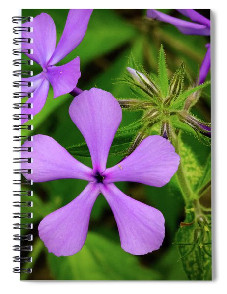 Blue Phlox Spiral Notebook