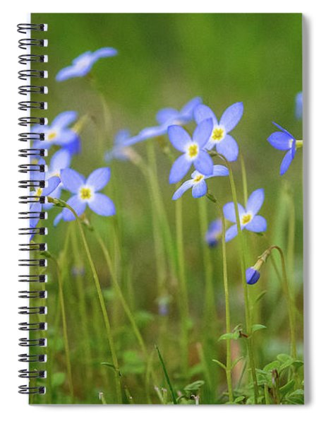 Blue Wild Flowers Bluets Spiral Notebook