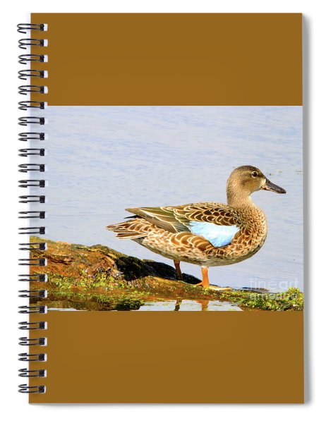 Blue-winged Teal Female Duck Spiral Notebook