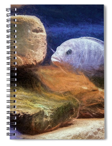 Blue Zebra Painted Spiral Notebook