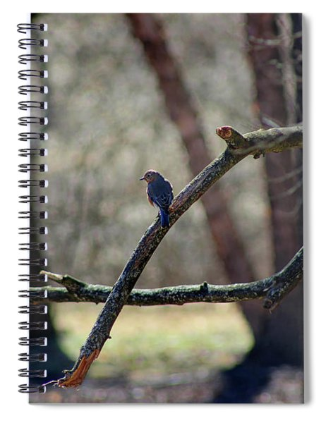 Bluebird, Bluebird, Sing To Me Spiral Notebook