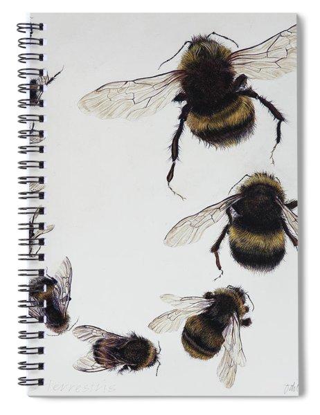 Bombus Spiral Notebook
