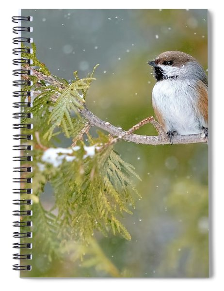Boreal Chickadee In Winter Spiral Notebook