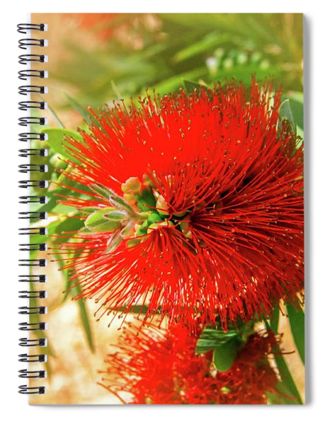 Bottlebrush Bloom Spiral Notebook