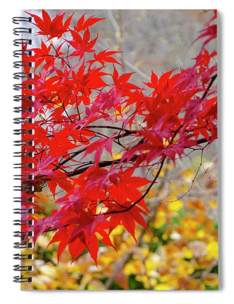 Brilliant Fall Color Spiral Notebook