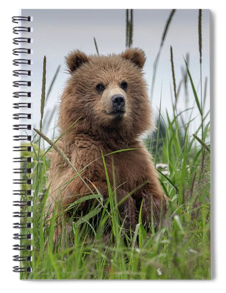 Brown Bear Cub In A Meadow Spiral Notebook