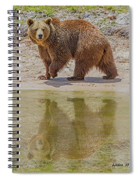 Brown Bear Reflection Spiral Notebook