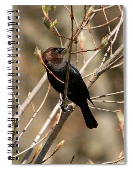 Brown-headed Cowbird 2 Spiral Notebook