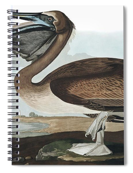 Brown Pelican, Pelecanus Fuscus By Audubon Spiral Notebook