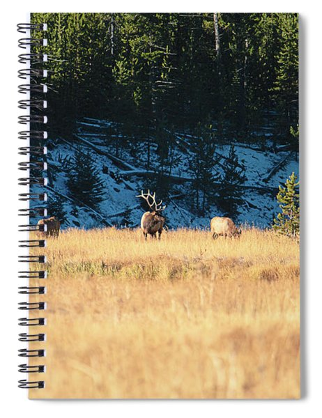 Bull And His Babes Spiral Notebook
