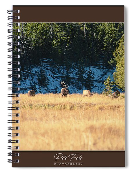 Bull And His Babes Poster Spiral Notebook