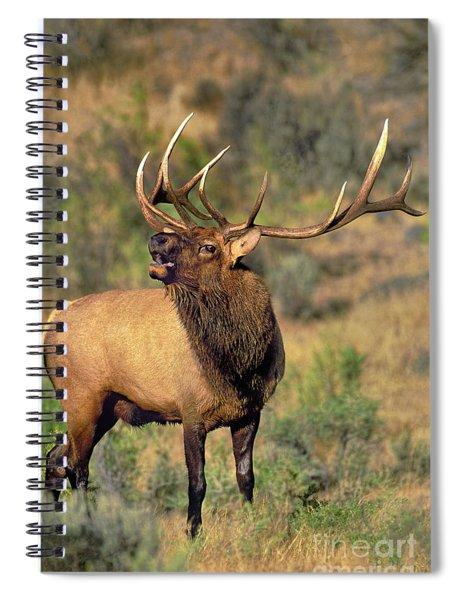 Bull Elk In Rut Bugling Yellowstone Wyoming Wildlife Spiral Notebook