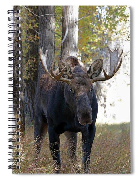 Bull Moose Approaching Spiral Notebook