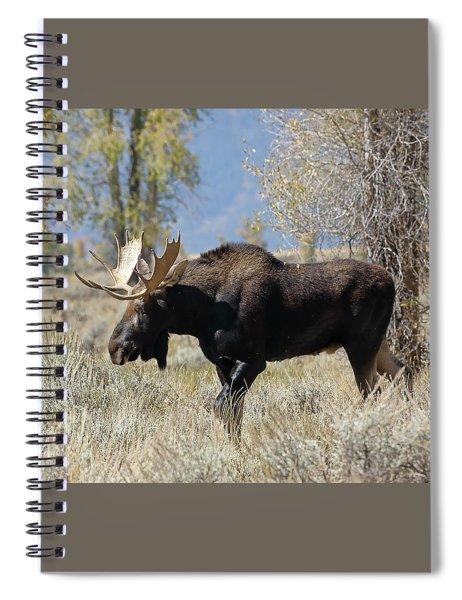 Bull Moose In Sage Spiral Notebook