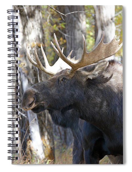 Bull Moose Study Spiral Notebook