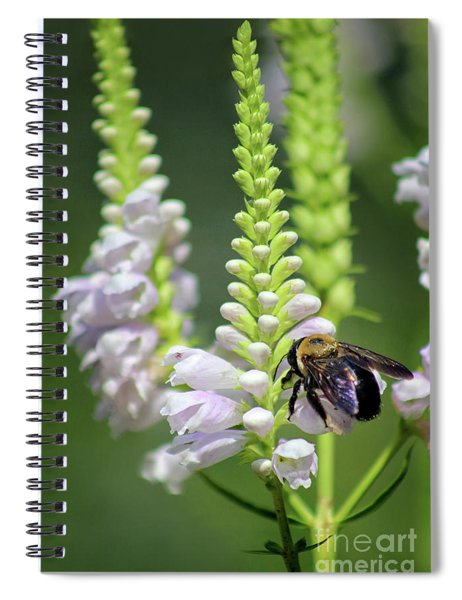 Bumblebee On Obedient Flower Spiral Notebook