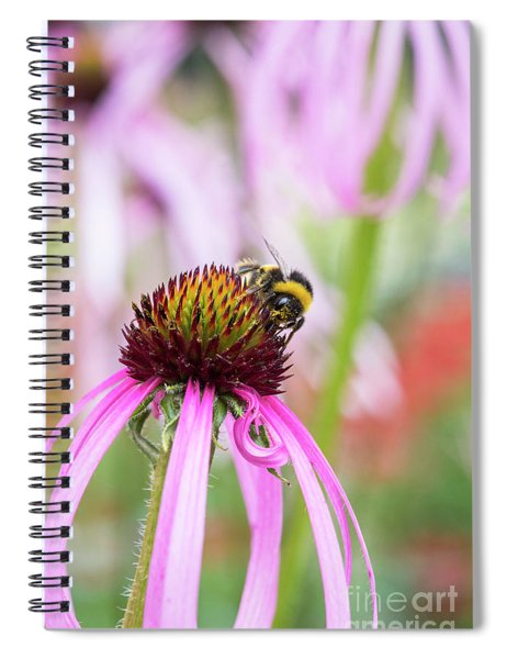 Bumblebee On Echinacea Simulata Flower Spiral Notebook