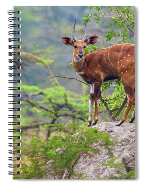Bush Buck Spiral Notebook