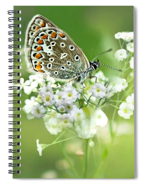 Butterfly On Babybreath Spiral Notebook
