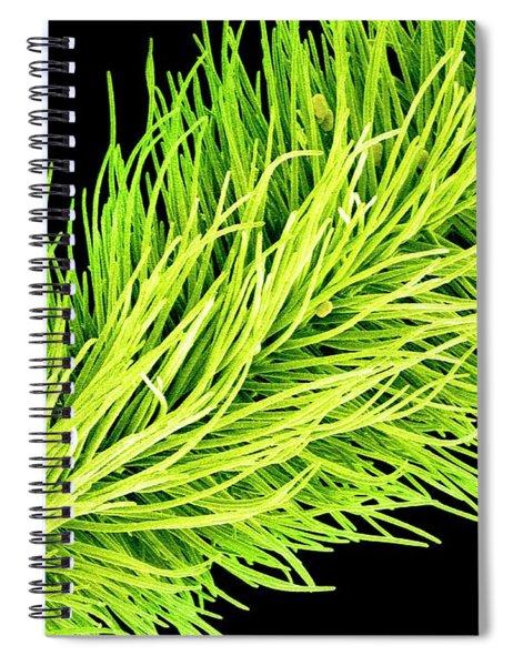 C016/0065 Spiral Notebook
