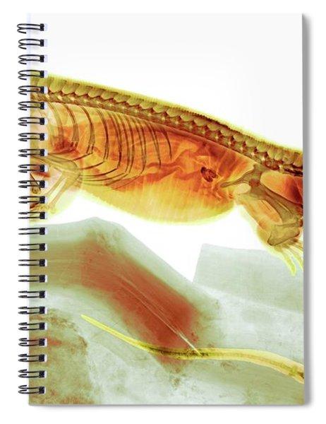 C025/8504 Spiral Notebook