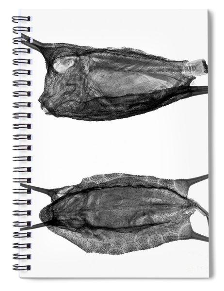 C038/4737 Spiral Notebook