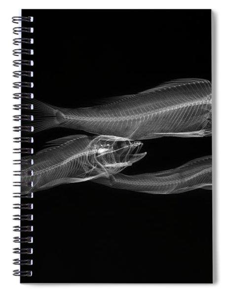 C038/4738 Spiral Notebook