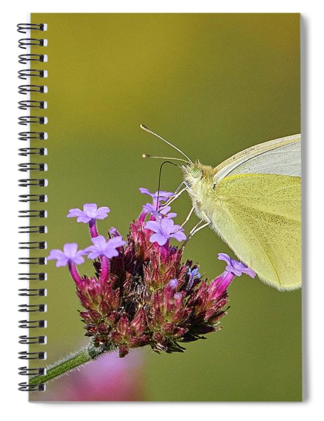 Cabbage White Butterfly Spiral Notebook