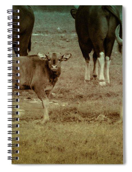 Calf Posing Spiral Notebook