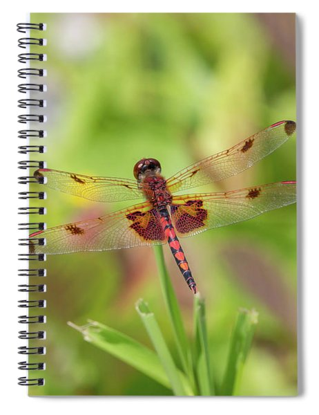 Calico Pennant Dragonfly Spiral Notebook