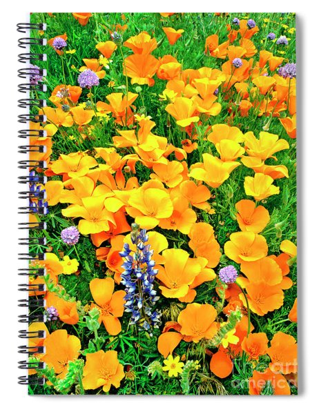 California Poppies And Betham Lupines Southern California Spiral Notebook