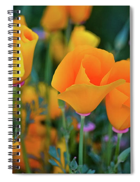 California Poppies Lake Elsinore Spiral Notebook