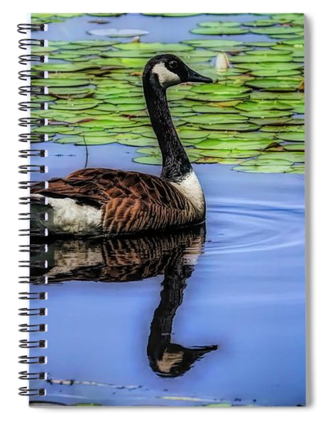 Canada Goose Swimming Alone. Spiral Notebook